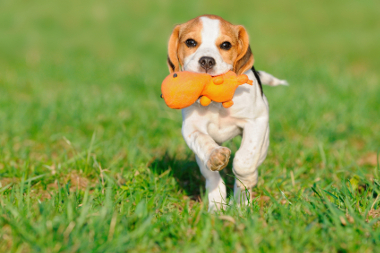 Dog Walking Services In Arlington
