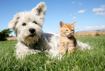 Arlington Pet Sitting Rates | Dog & Cat Sitting | Amanda's